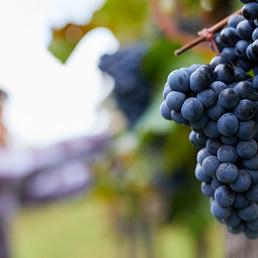 Schmeckt biologischer Wein anders?