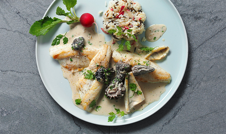 Eglifilets mit Kräuter-Morchel-Sauce